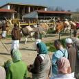 Az MKTHK állásfoglalása a tejiparból származó tejtermékek fogyasztásával kapcsolatban. A lakto-vegetáriánus táplálkozás, azaz a tejtermékek fogyasztásával kiegészített vegetáriánus étrend a védikus kultúra része. Azonban a tej fogyasztása során, mint minden más […]