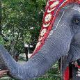 A hinduizmus a legsokoldalúbb vallásos képződmény. Sokarcúságának egyik magyarázata, hogy megalapítása nem fűződik egyetlen személyhez, hanem évszázadok során mintegy önmagából, a benne lakozó erők következtében és a külső körülmények hatására jött […]