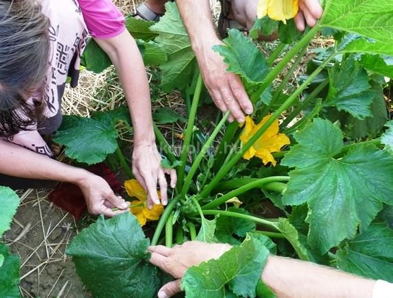 Krisna-völgy, kertészet