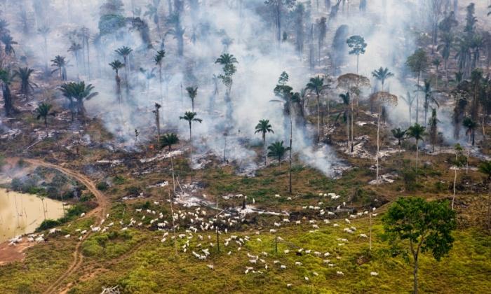 Brazíliai őserdők pusztítása
