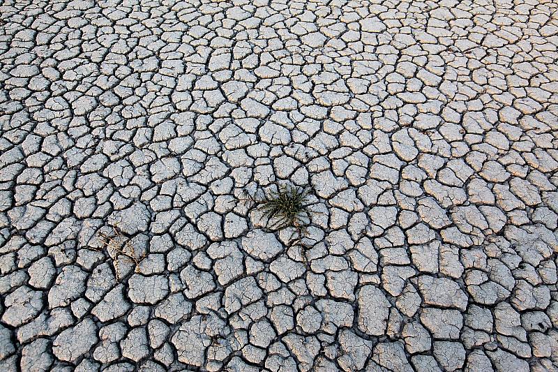 Szikes talaj - az Alföld elsivatagosodásának előjelei