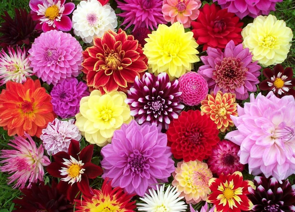Virágünnep