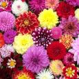 Kis ajándékkal készülünk ezen a napon minden kedves látogatónknak! Ezúttal a vendégvezetés során nem csak a szentély felfedezése lesz a cél. Kedves látogatóinkat egy kis sétára invitáljuk virágkertészetünkbe, ahol megismerkedhetnek az […]