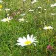 Szakmai programmal és körbevezetésekkel várják az érdeklődőket a nyílt napon! 2012 júliusában a Nemzetközi Ökofalu Hálózat (Global Ecovillage Network, rövidítve: GEN) a somogyvámosi Krisna-völgyben rendezi meg nagyszabású éves találkozóját és szakmai […]