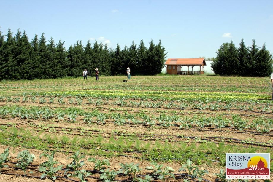 Zöldségeskert