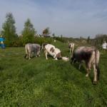 Fotó: Répásy Zsolt http://zsoltrepasy.com/