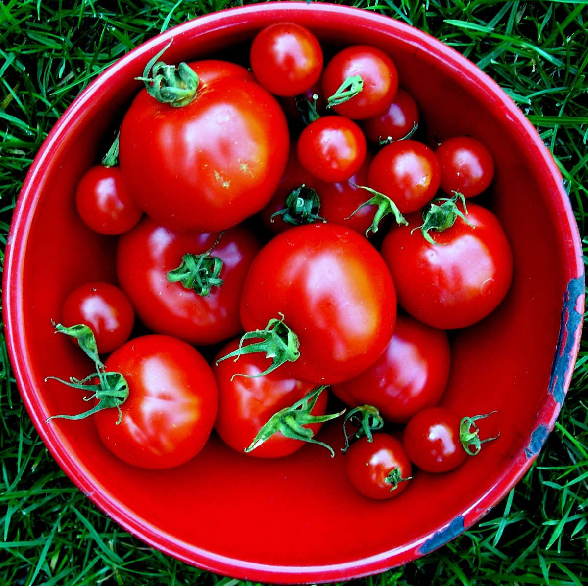 Jacki Dougan tomato in square