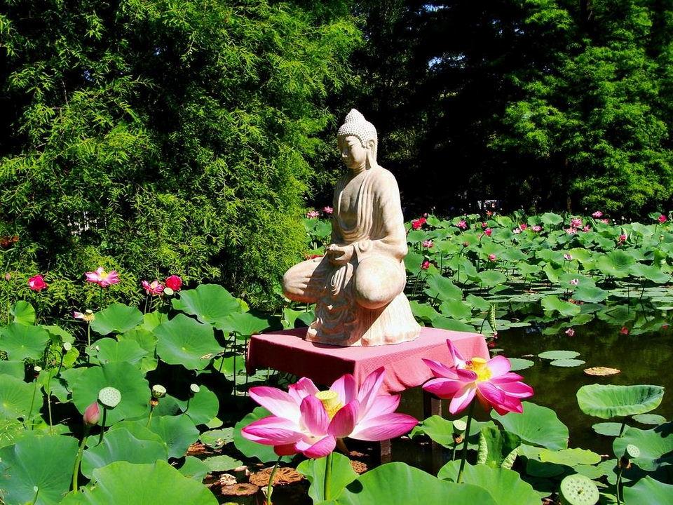 buddha_lotusz