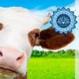 Október elején három világnap is emlékeztet arra, hogy Földünk számára a húsfogyasztás a legkárosabb emberi szokás. Ha valami hasznosat szeretnénk tenni Földünk védelméért, akkor kezdjük a húsevés elhagyásával. Október 1-én tartjuk […]