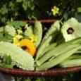 Ezen a napon minden kedves vendégünk kóstolhat e remek csemegéből készített finomságokat, és lehetőségük van önálló felfedezést tenni kertészetünkben, jobban megismerkedni e mesebeli növény történelmével, életútjával, egészségre való hatásával, elkészítésével és […]
